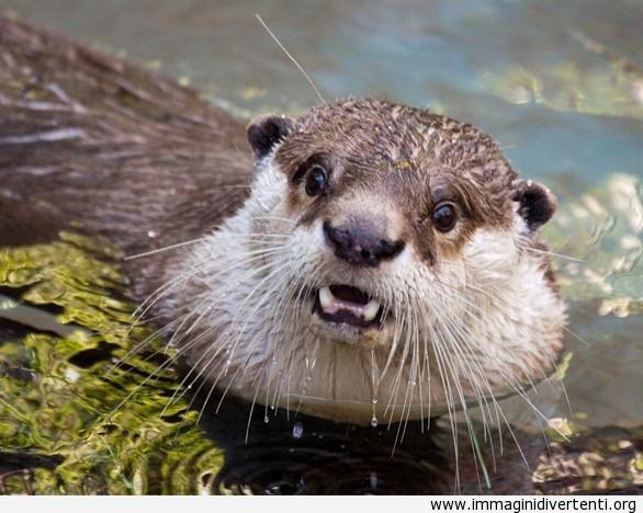 animale-nellacqua immaginidivertenti.org