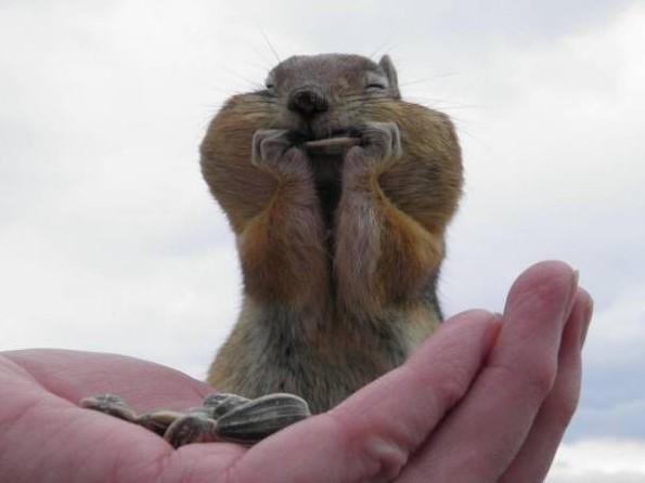 Immagini di Animali Divertenti