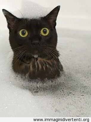 gatto-nero-doccia immaginidivertenti.org