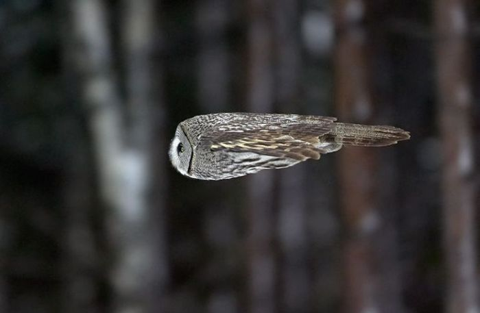 uccello che vola