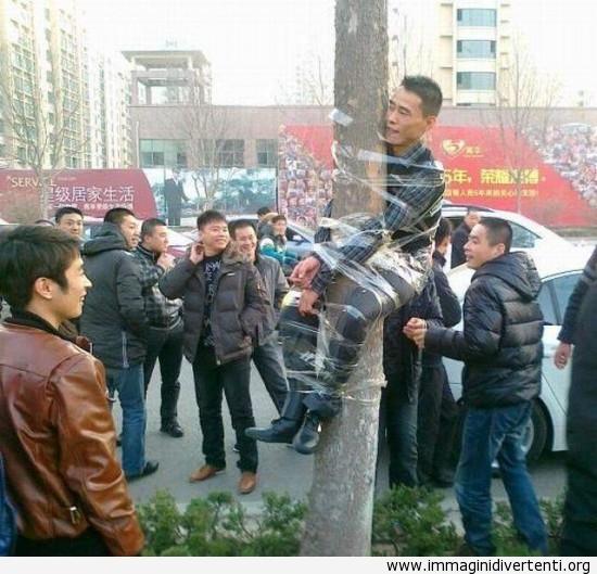 Hanno trovato un'uomo sull'albero immaginidivertenti.org
