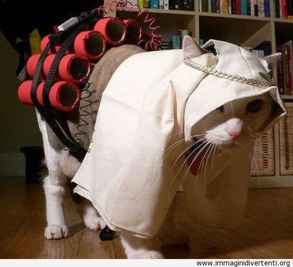 Il gatto con costume di carnevale immaginidivertenti.org