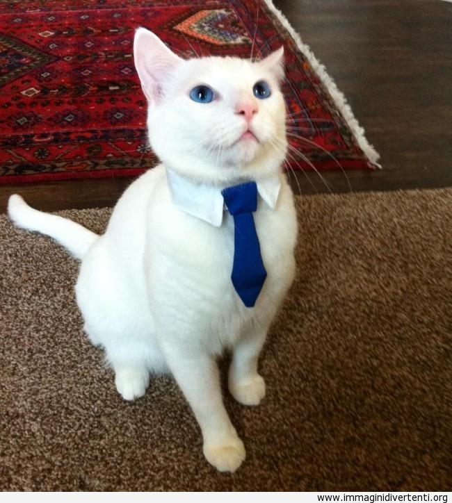Il gatto è pronto per il suo primo giorno di lavoro immaginidivertenti.org