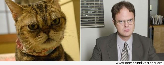 Il gatto: non mi imitare immaginidivertenti.org