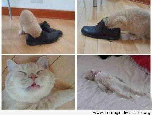 Il gatto quando gioca con la scarpa del suo padrone immaginidivertenti.org