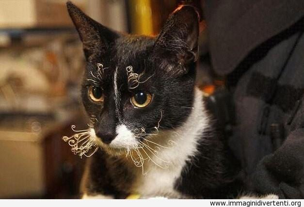 Il gatto è rimasto così dopo essere stato salvato da un edificio in fiamme immaginidivertenti.org