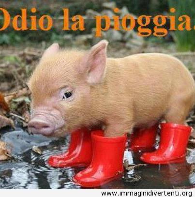 Questo animaleto si è messo le sue scarpette rosse per la pioggia