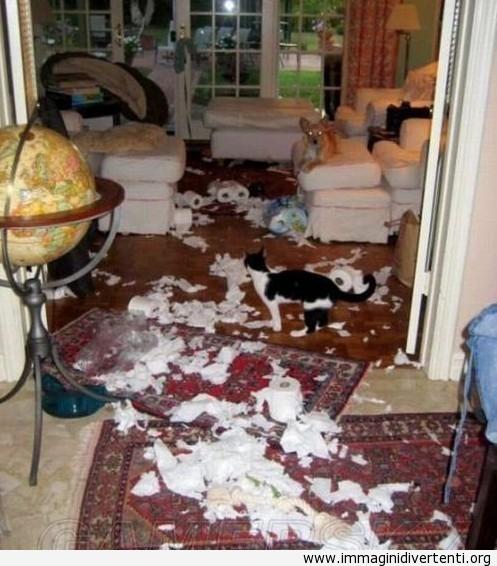 Quando il gatto gioca con i rotoli di carta igienica immaginidivertenti.org
