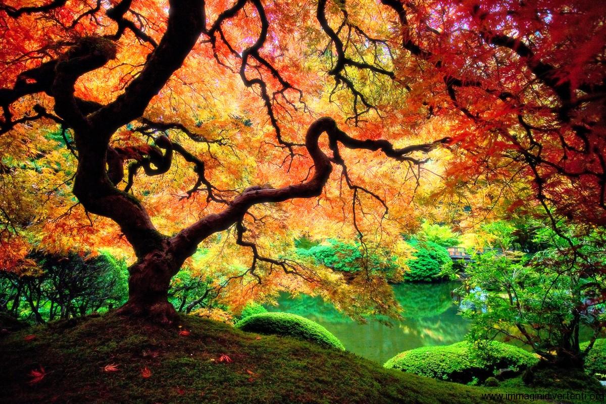 foto albero