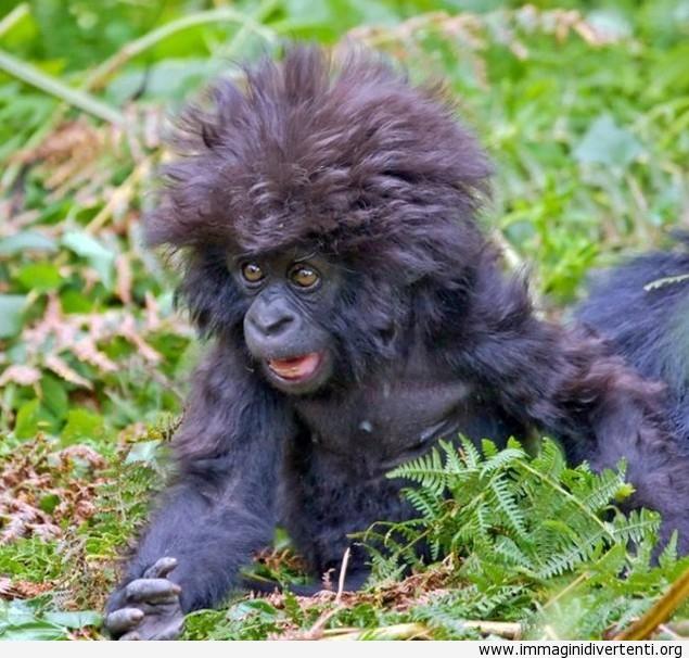scimmia sciocata immaginidivertenti.org