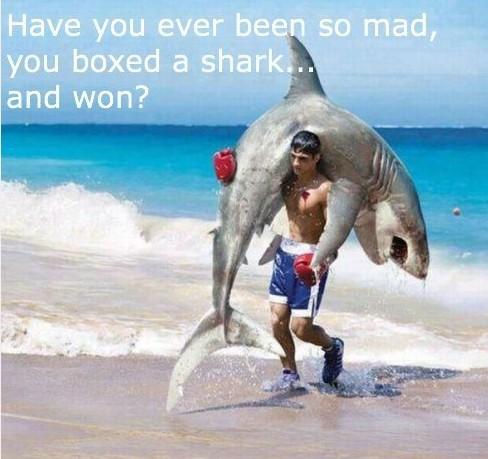 catturato uno squalo al mare