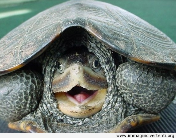 tartaruga-si-nasconde