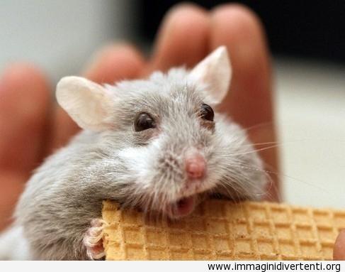 topo che riceve il cibo immaginidivertenti.org