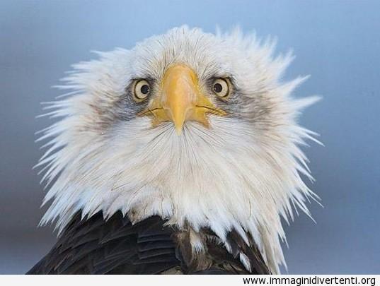 uccello impazzito