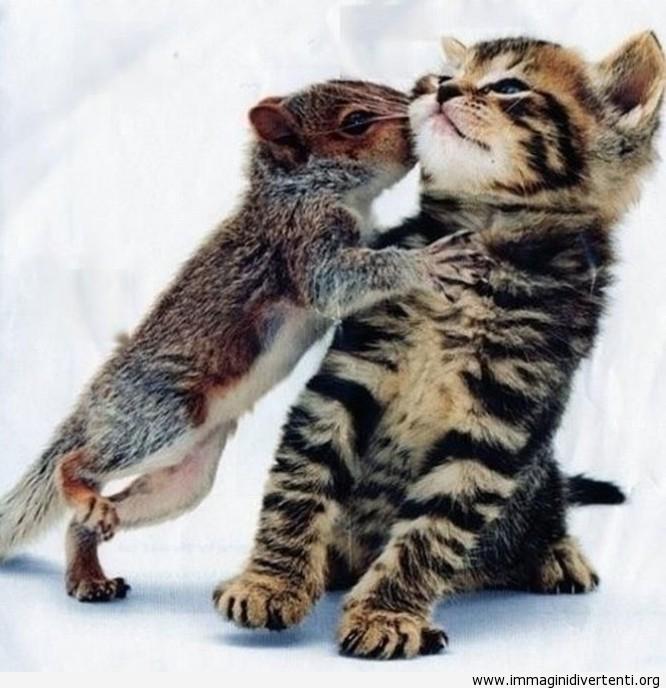 Baciare il gatto immaginidivertenti.org