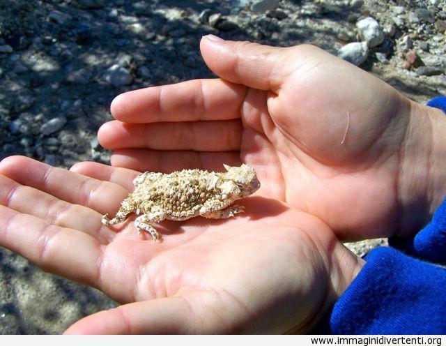 Così piccolo immaginidivertenti.org