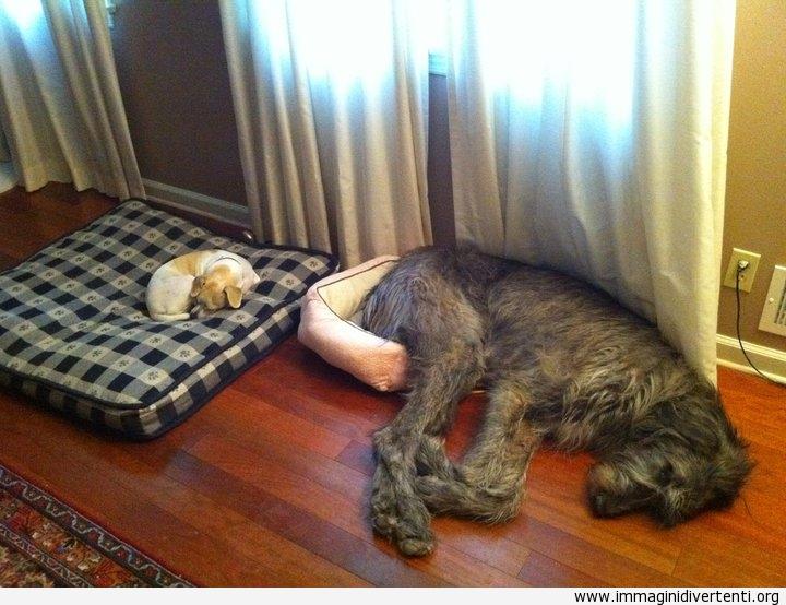 Credo che oggi dormirò qui immaginidivertenti.org