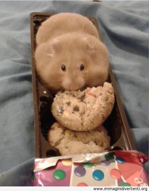 Ha trovato i biscotti cookies immaginidivertenti.org