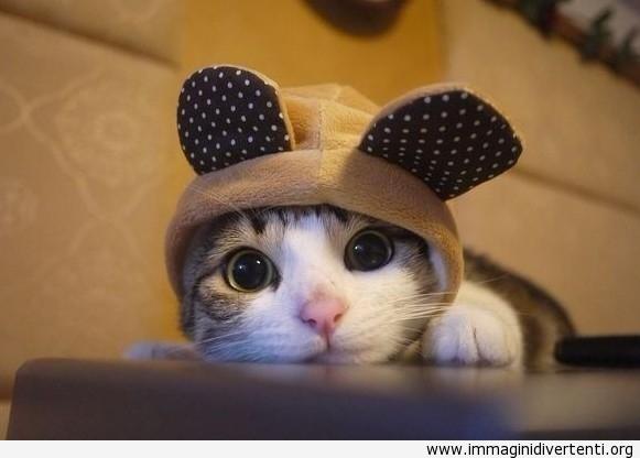 Il gatto più simpatico del mondo immaginidivertenti.org