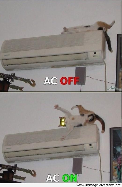 Il mio divertente gatto si è dormito sulla condizionatore d'aria immaginidivertenti.org