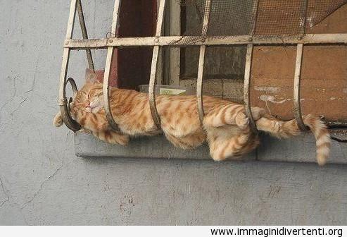 Livello di pigrizia - PRO immaginidivertenti.org