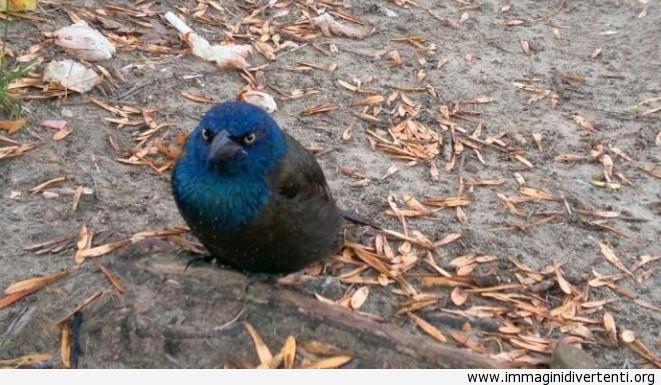 Oggi ho trovato un vero uccello arrabbiato immaginidivertenti.org