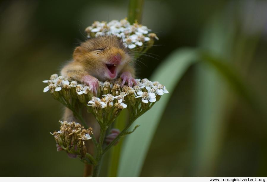 oh-che-bei-fiori