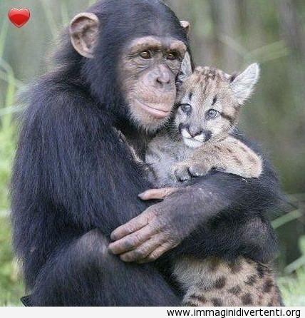 Scimmia con sentimenti immaginidivertenti.org