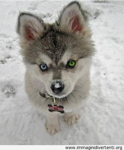 Uno occhio blu e uno verde immaginidivertenti.org