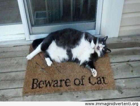 Attenzione del gatto immaginidivertenti.org
