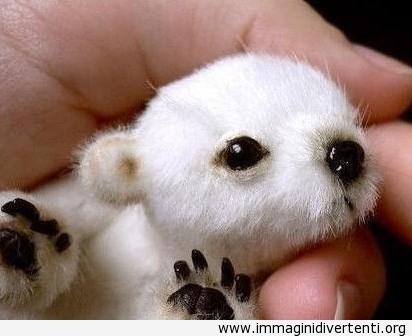 Avete mai visto un baby orso polare? Oggi è il tuo giorno fortunato! immaginidivertenti.org