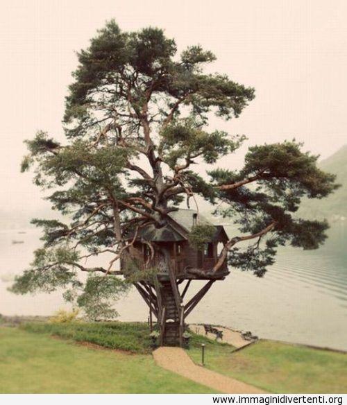 Bellissima casa sull'albero immaginidivertenti.org