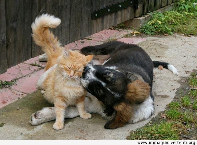 Cane che da un bacio al gatto immaginidivertenti.org