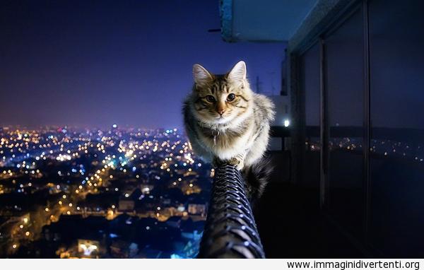 Gatto Fearless è senza paura immaginidivertenti.org