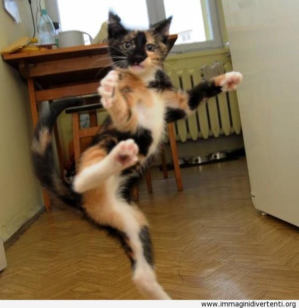 gatto karate immaginidivertenti.org
