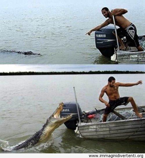 Guardate c'è un cocodrilo. Oh no, devo scappare subito immaginidivertenti.org