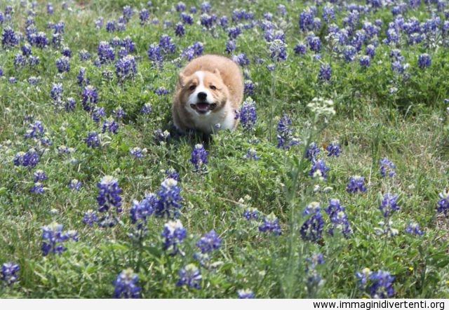 Ho trovato dei bellissimi fiori immaginidivertenti.org
