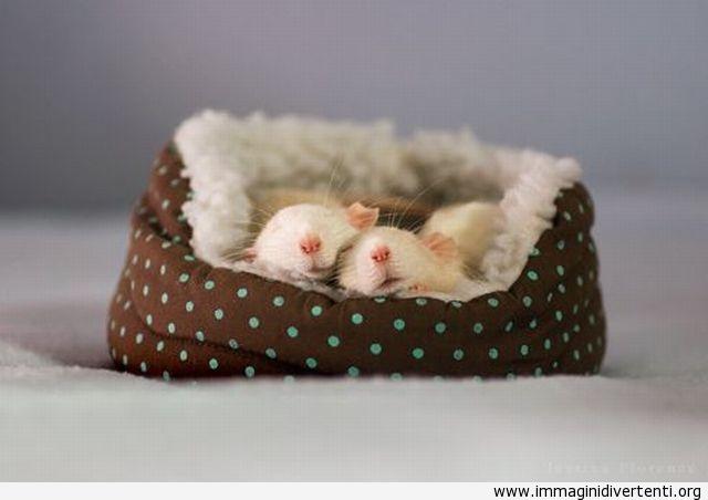 I topini bianchi che dormono immaginidivertenti.org