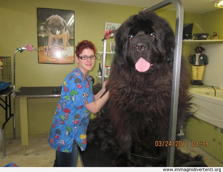 iIl cane più grande che abbia mai visto immaginidivertenti.org