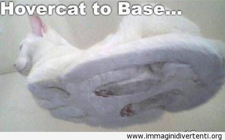 Il gatto bianco sul vetro immaginidivertenti.org