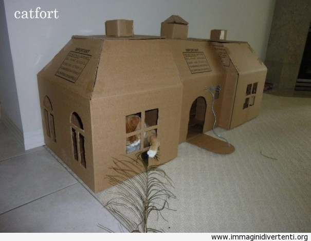 Il gatto e la sua nuova casa di scatola immaginidivertenti.org