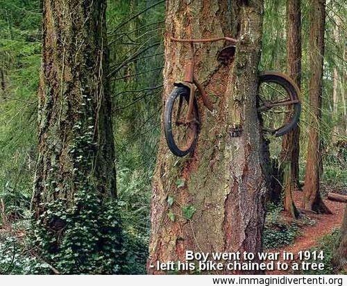Il ragazzo è andato in guerra nel 1914 - la sua bicicletta rimasta in un albero immaginidivertenti.org