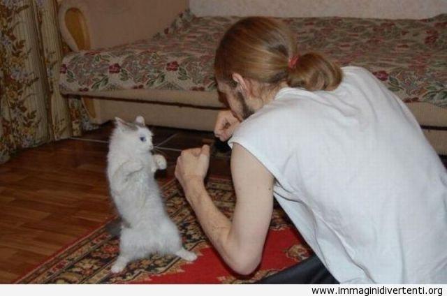 Insegnare l'arte marziale al gatto immaginidivertenti.org