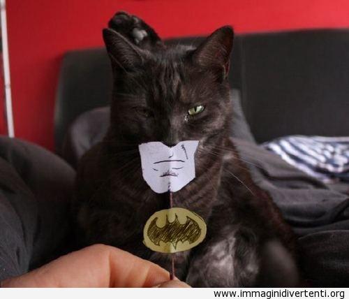 luomo gatto immaginidivertenti.org