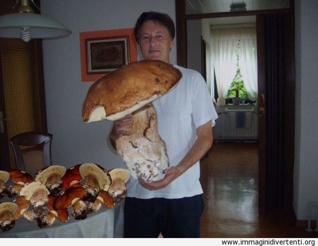 Mai visto un fungo così gigante immaginidivertenti.org