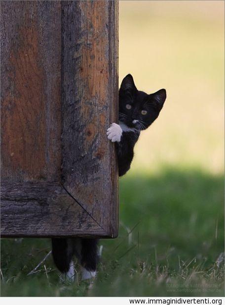 nascondersi dietro la porta