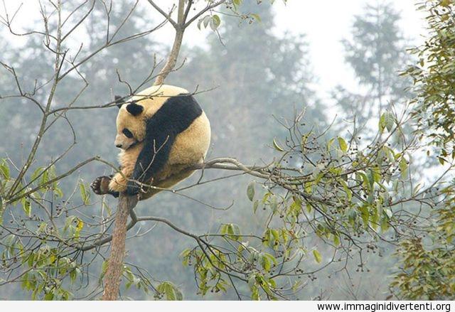 Riposarsi sull'albero immaginidivertenti.org