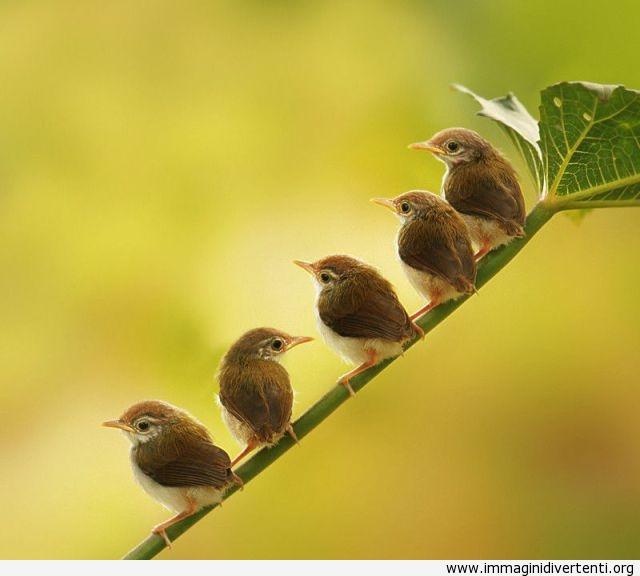 simpatici uccellini immaginidivertenti.org