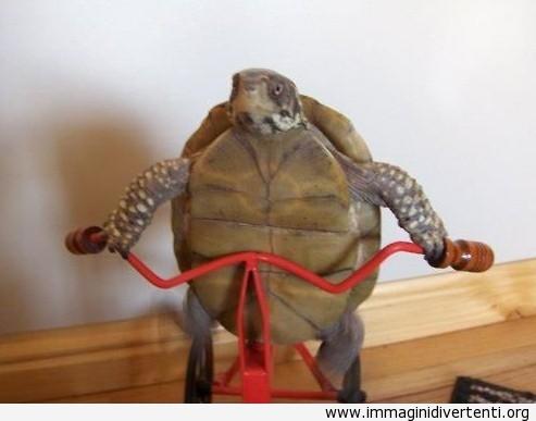 Tartaruga in allenamento immaginidivertenti.org