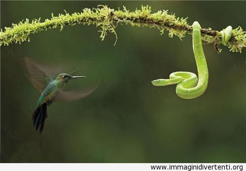 Uccellino e il serpente verde chiaro immaginidivertenti.org